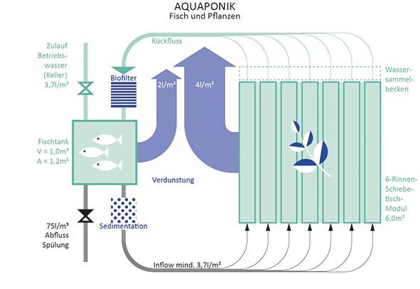RWF-Farmtyp Aquaponik / Fisch und Pflanze (c) RWF