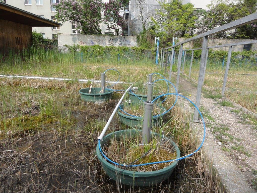 Verdunstungswannen im Schilfbeet am Block 6, Frühjahr 2015.(c) ROOF WATER-FARM,  Foto: Grit Bürgow