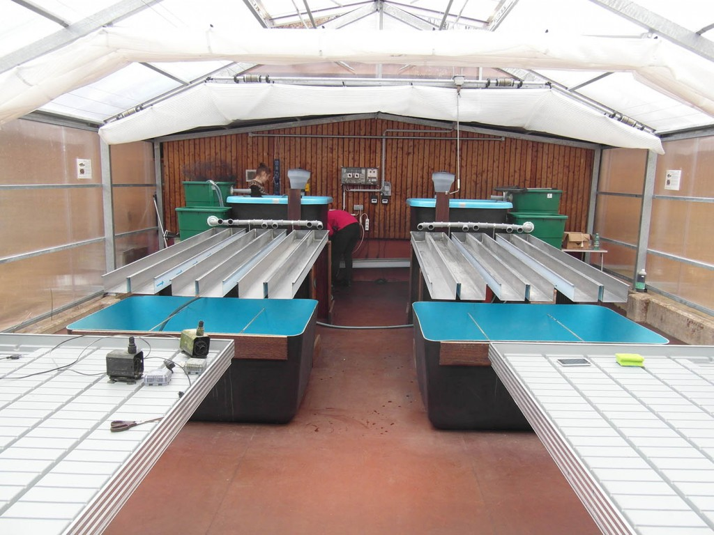 Einrichtung der Aquaponik-Teststrecken 1 und 2. Foto: Janine Dinske