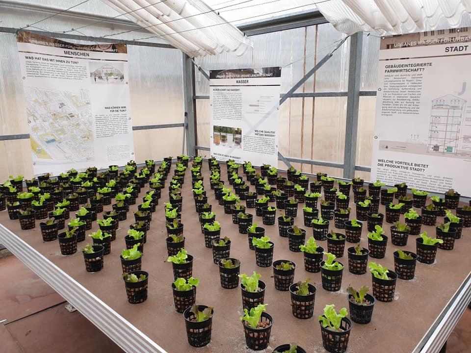 Salat KickOff 2020 (c) ROOF WATER-FARM. Foto: Grit Bürgow