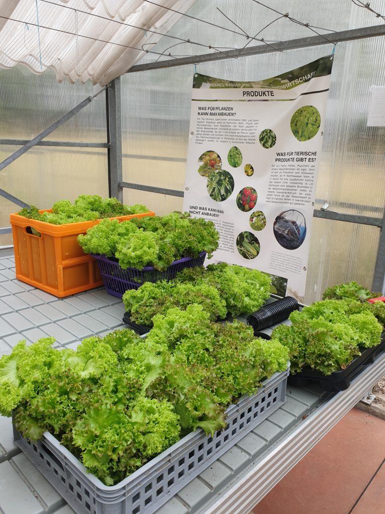RWF-Salaternte 2020 (c) ROOF WATER-FARM. Foto: Grit Bürgow